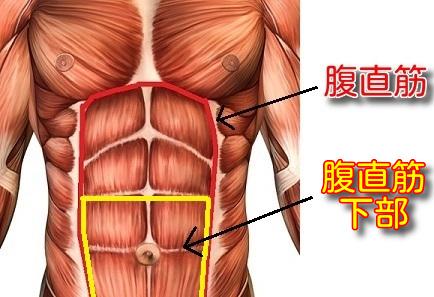 腹直筋下部と腹斜筋