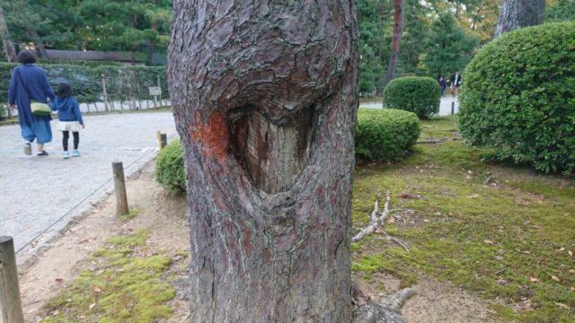 松の傷 アイキャッチ